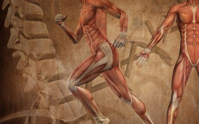 Holistic approach of osteopathy and of tissue memory – part two