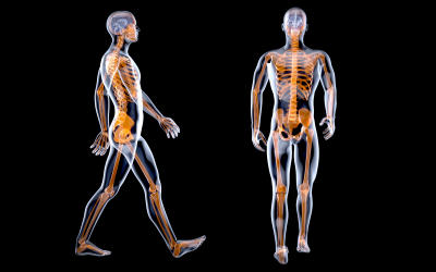 Tensegrity: an osteopathic journey into structure-function 1 – part one